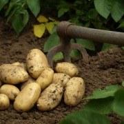 Cocina con alimentos ecológicos: Pastel de Pollo con Patatas